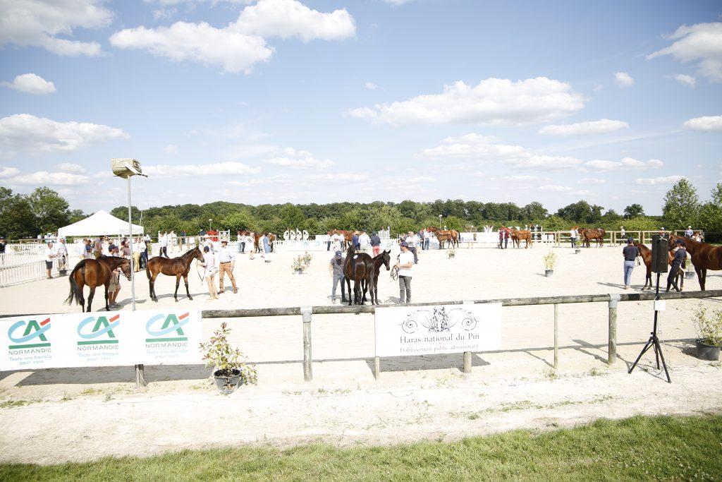 chevaux sur le ring pendant le concours