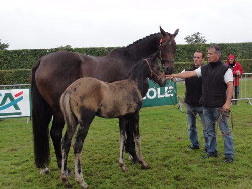Le Prézien présenté foal en 2011