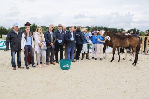 Nobody Knows, champion suprême des foals en 2017 pour le haras de Montaigu